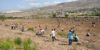 tree-planting-team-in-action