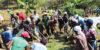 kobonal-haiti-community-gardens-2