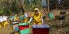 nueva-segovia-beekeeping-1